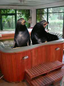 Hot Tub Service and Repair - Get mad like a sea lion and fix the spa fast